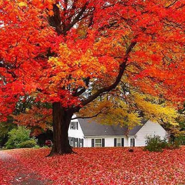 Árvore-Bordo
