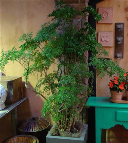 árvore-da-felicidade_01