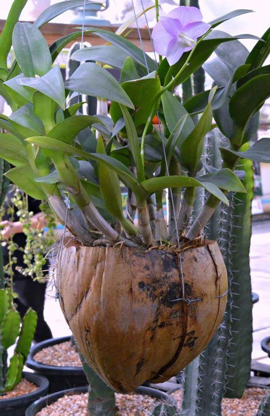 casca de coco