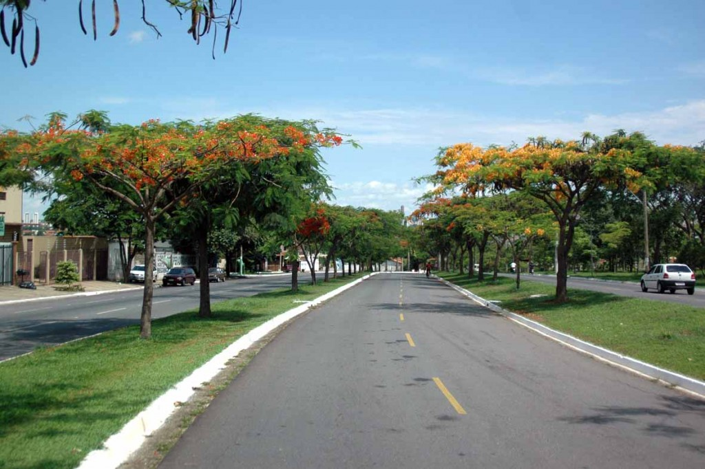 Arborizacao-4