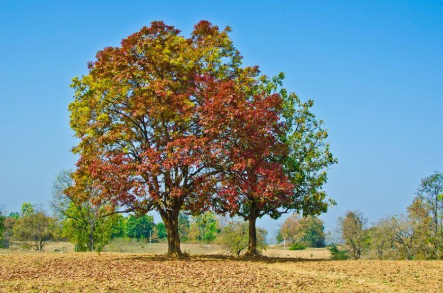 As folhas perdem o verde e ficam alaranjadas no outono