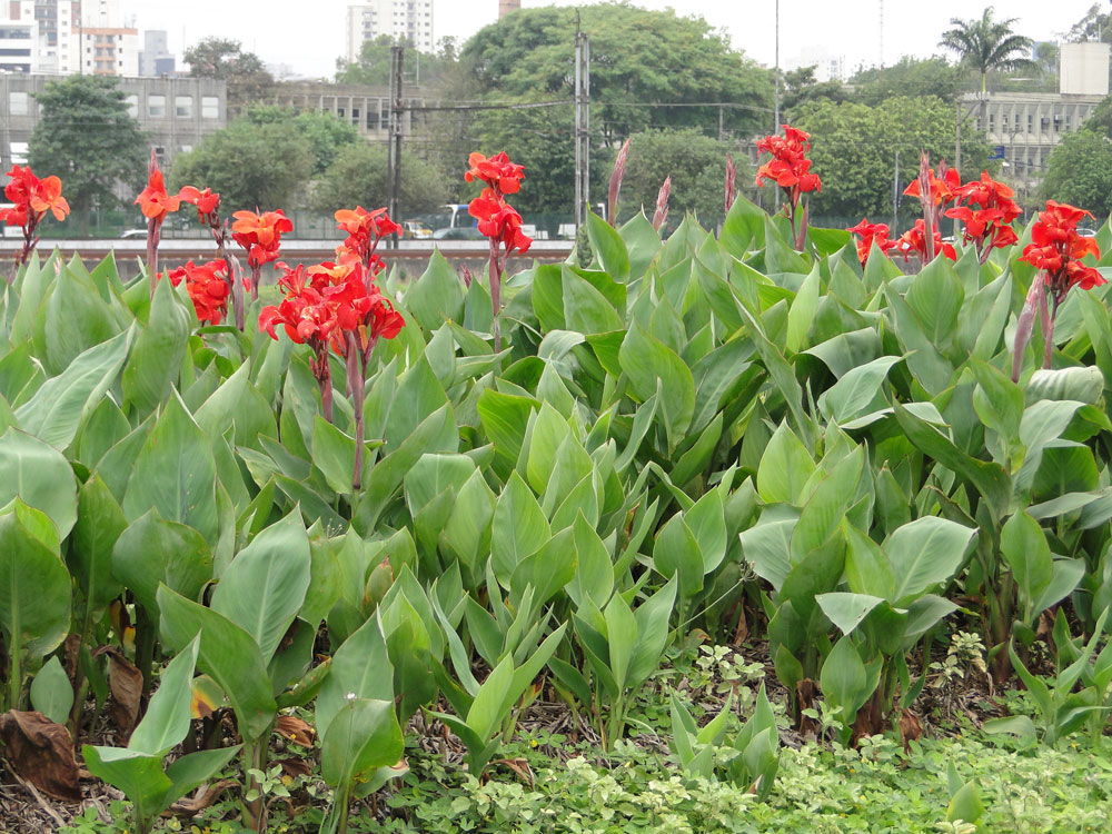 Cuidados Plantasonya O Seu Blog Sobre Cultivo De Plantas