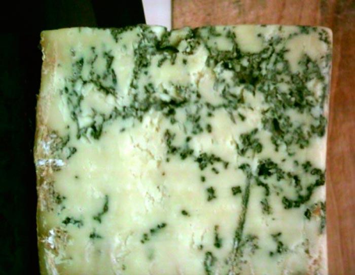 Bolor na fabricação de queijo Brie e Camembert (Penicillium camemberti)