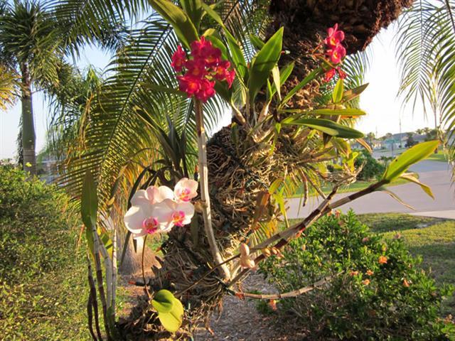 Datepalm+Orchids_222