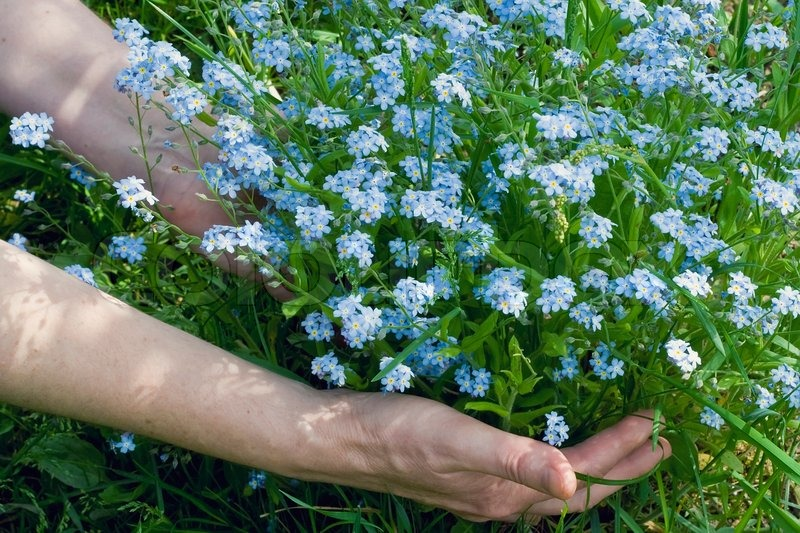 Flores-Plantadas-4