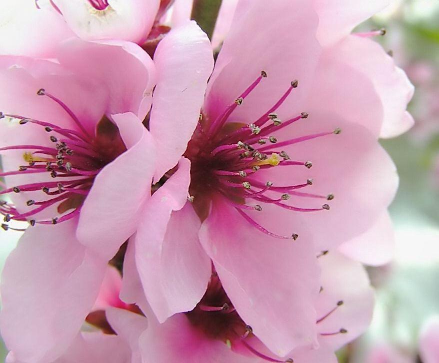 Flores-da-Primavera-8