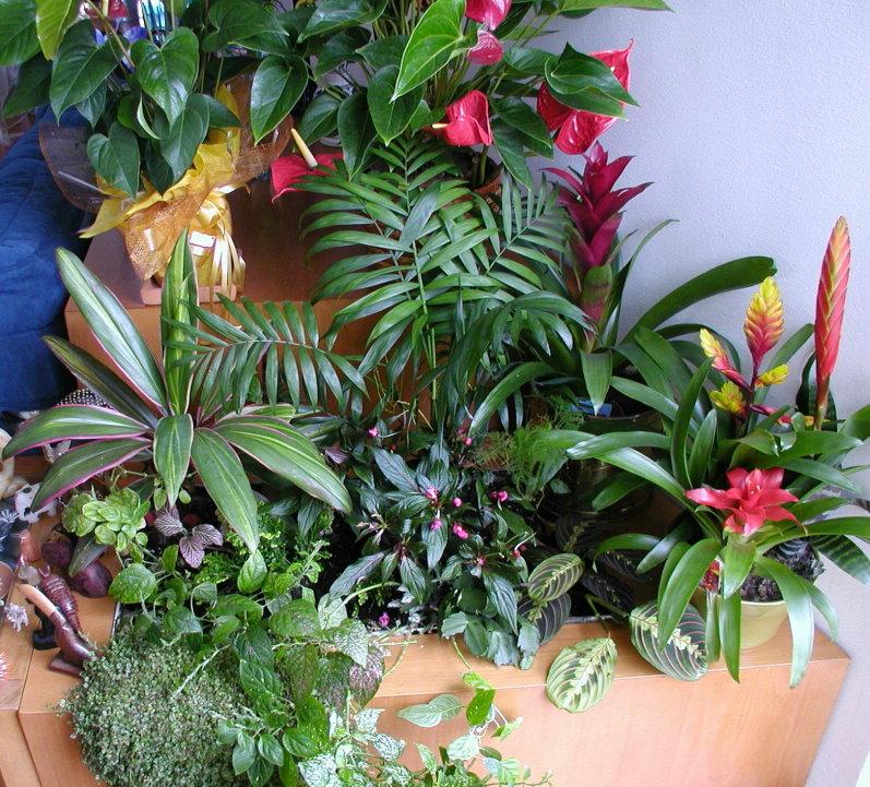 de um Jardim  PlantaSonya  O seu blog sobre cultivo de plantas e