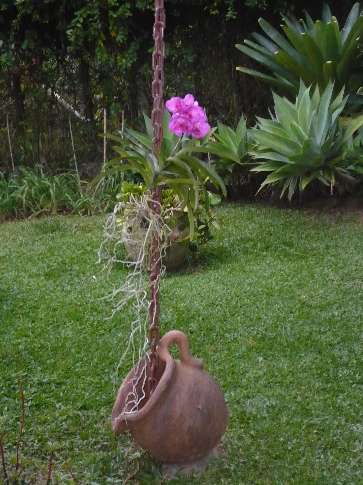 florada vanda 024
