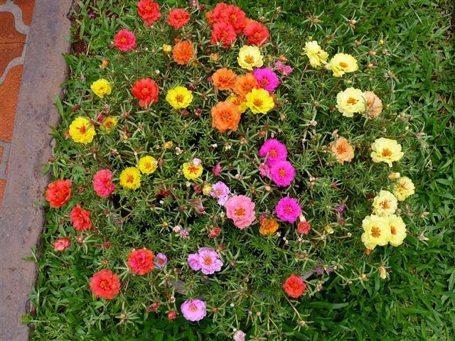 plantas para jardim muito sol:Plantas para um jardim ensolarado – PlantaSonya – O seu blog sobre
