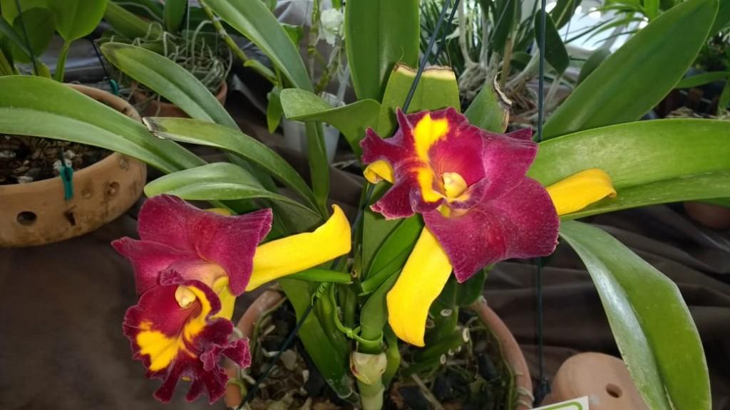 Orquídea-1