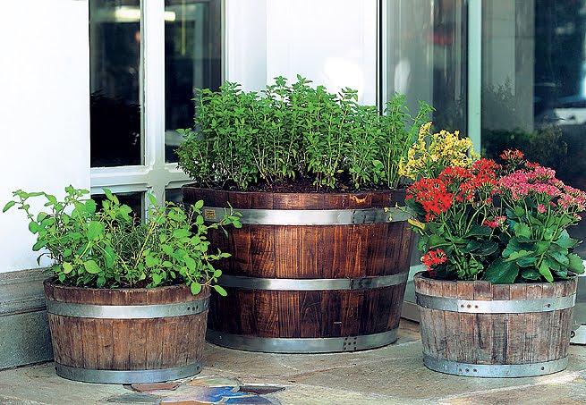 Plantas em barris