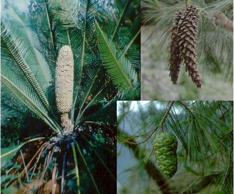 Reprodução vegetativa assexuada-e-sexuada