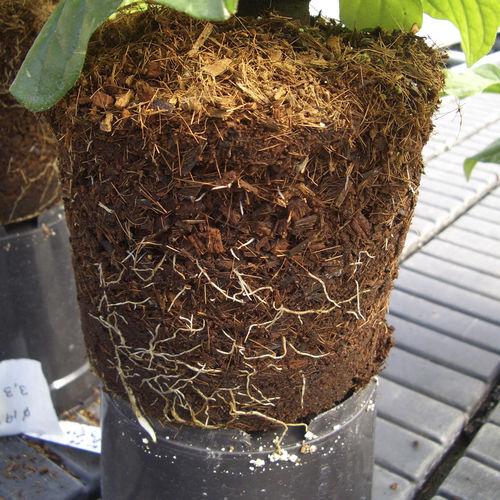 Substrato de cultivo fibra de coco