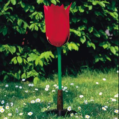 Tulipa-gesneriana