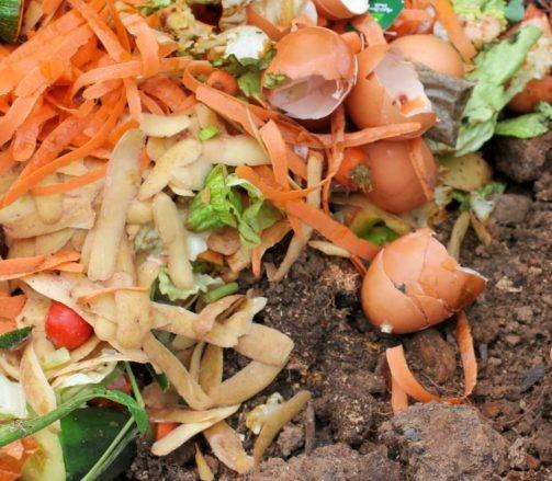 adubos-organicos-