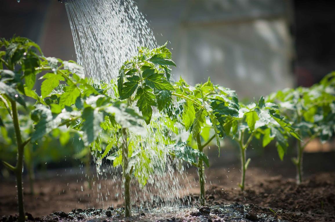 agua-plantas