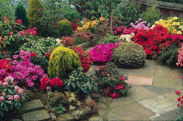 arbustos (Small)