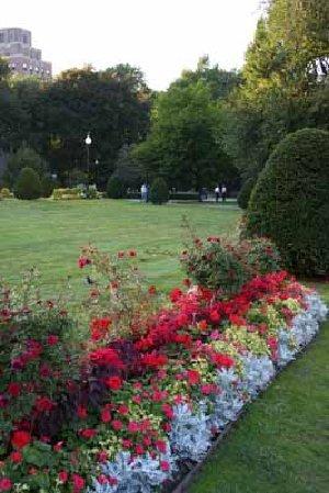 Interior e paisagismo plantasonya o seu blog sobre for Arbustos de interior