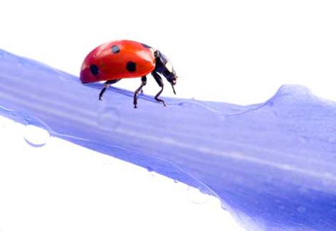 ataques-de-insetos-