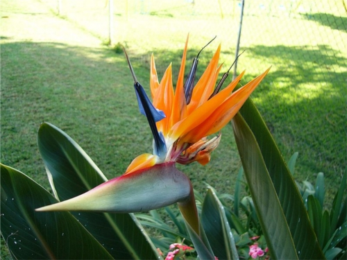 ave-do-paraíso