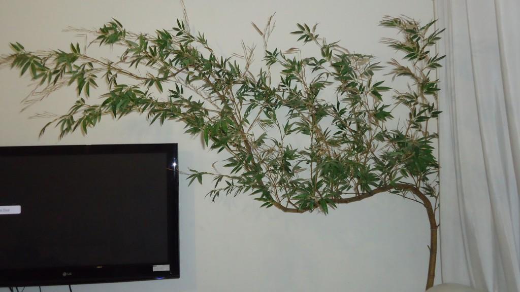 bambu-mossô