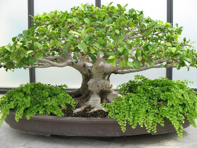 bonsai-arvore_ja