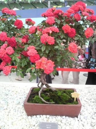 bonsai-de-roseira1