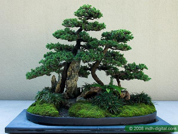 bonsai-saikei