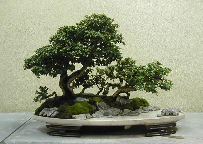 bonsai_original