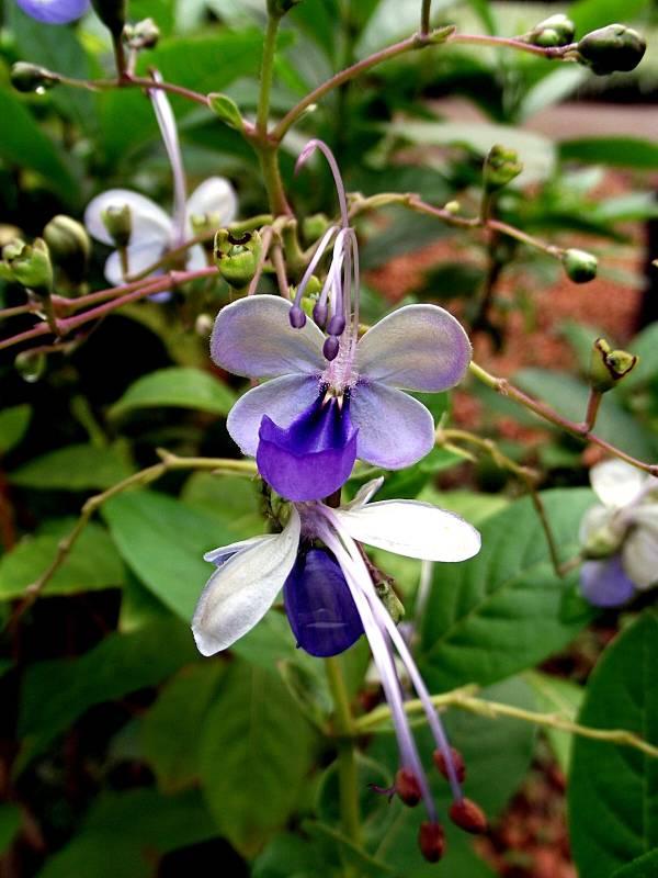 borboleta-azul-flor-2