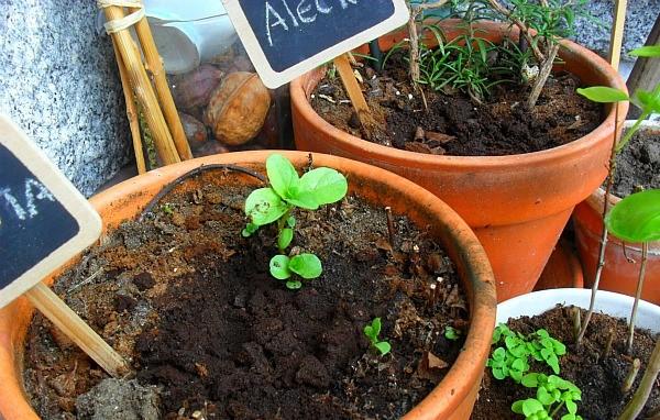 borras-café-plantas-fertilizantes