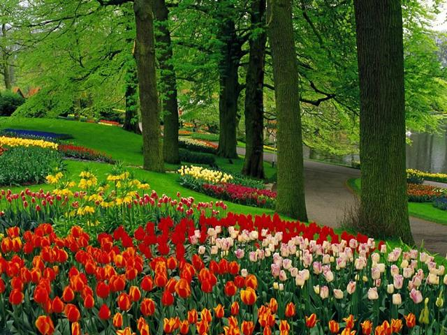 bosque de tulipas