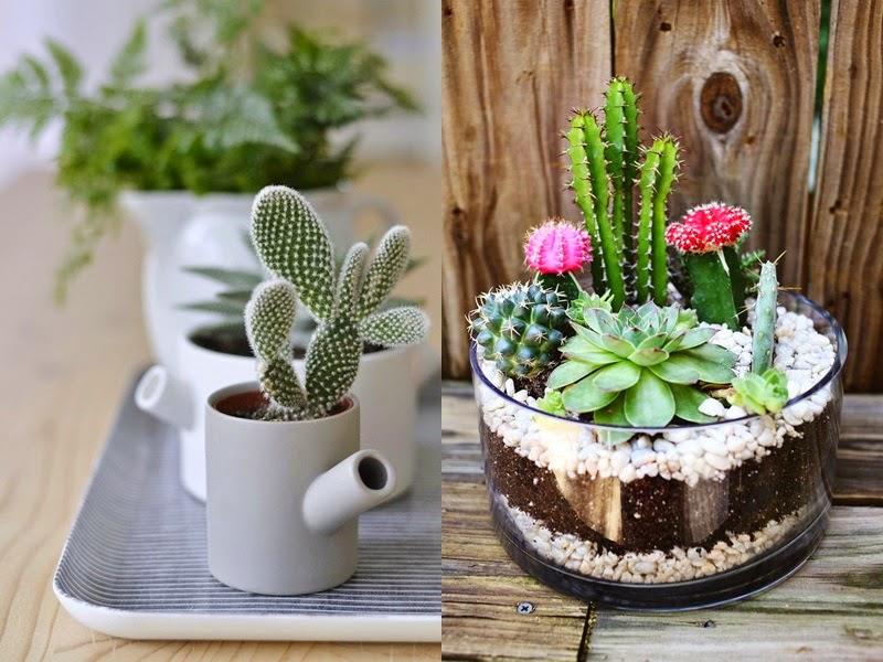 Saiba como cuidar dos mini cactos plantasonya o seu for Como plantar cactus