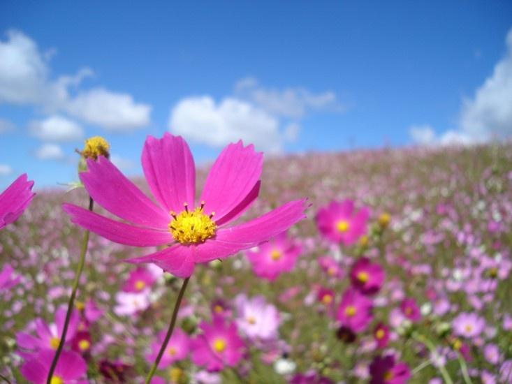 campo-con-flores