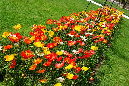 canteiros de flores 10