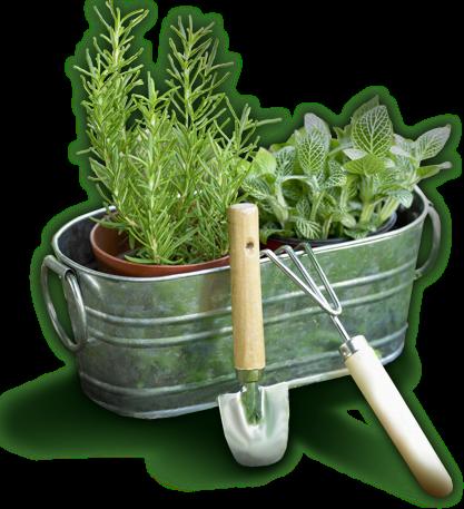 carrinho-de-plantas