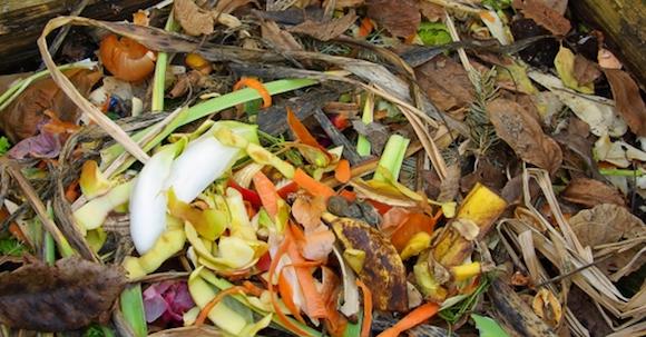 casca de legumes