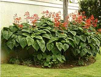 Aspectos na escolha das esp cies de arbustos plantasonya for Especies de arbustos