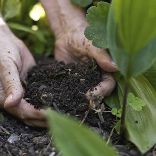 compostagem-adubo