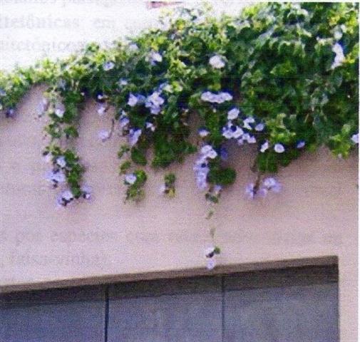 coroamento de muro (2)