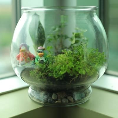 craft-terrarium