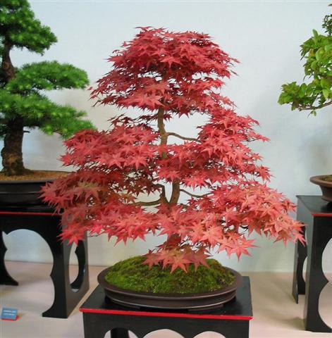 http://www.plantasonya.com.br/wp-content/img/cuidados-bonsais-Small.jpg