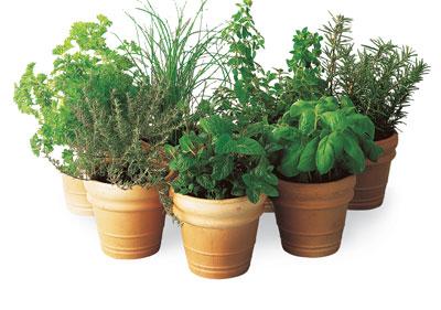 cultive-um-herbario-vasos