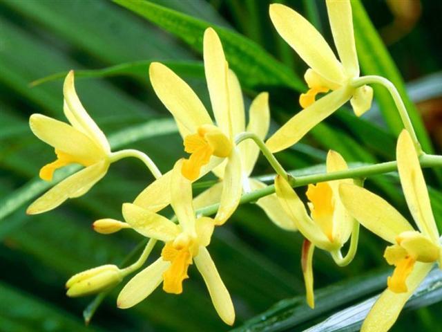 cultivo-orquideas-Small