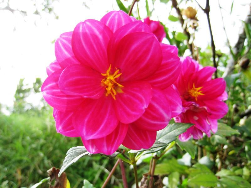 D lia plantasonya o seu blog sobre cultivo de plantas for Planta decorativa toxica