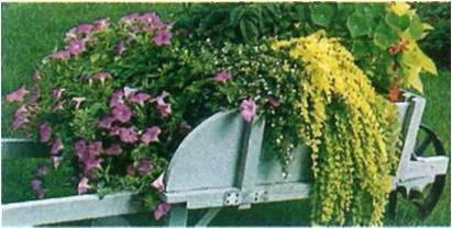 dicas-de-jardinagem-economica-2