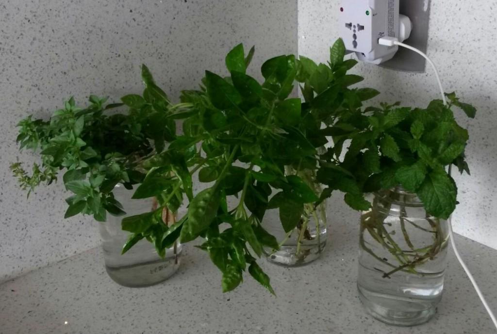 enraizar-plantas-em-água