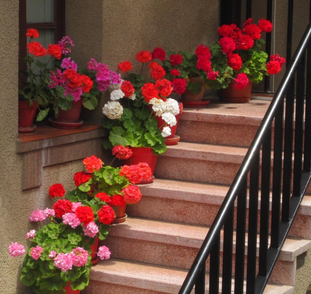 escada-com-geranios