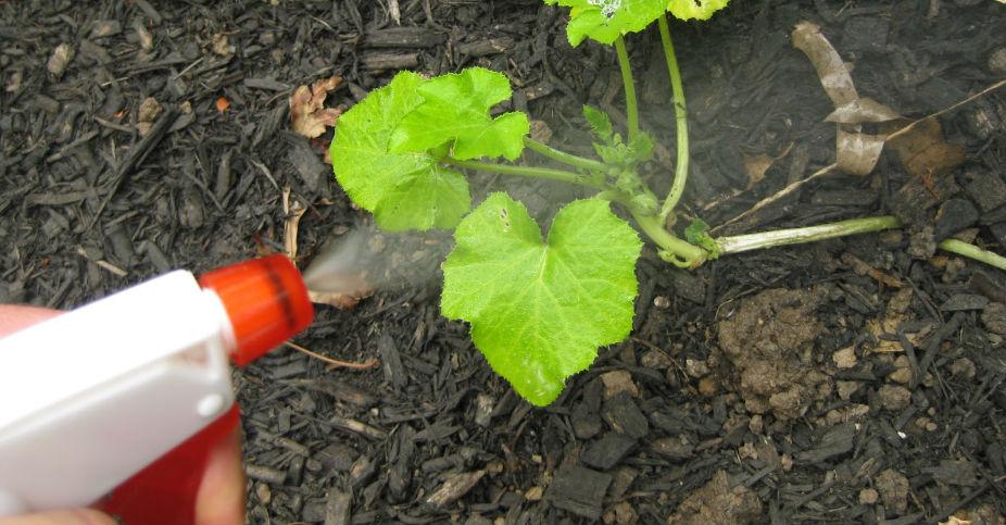 fertilizante-líquido