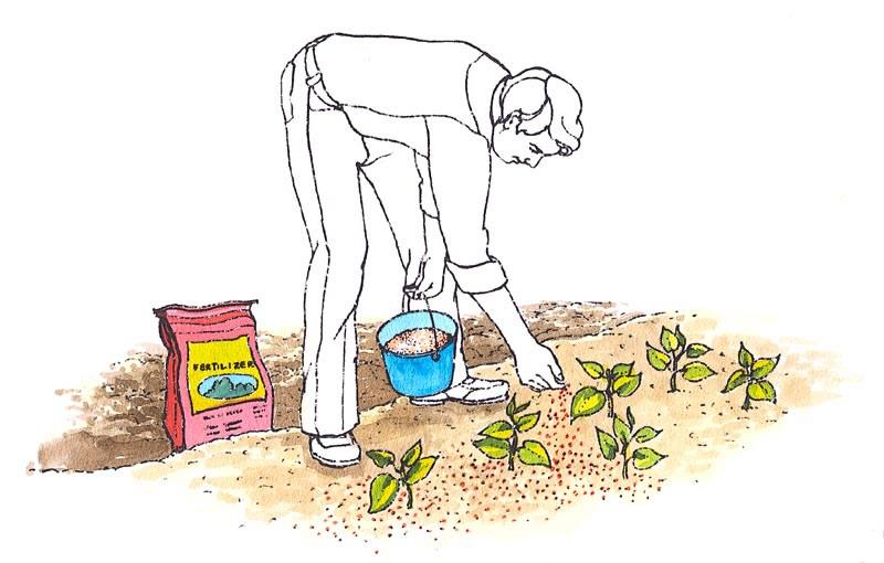 fertilizar